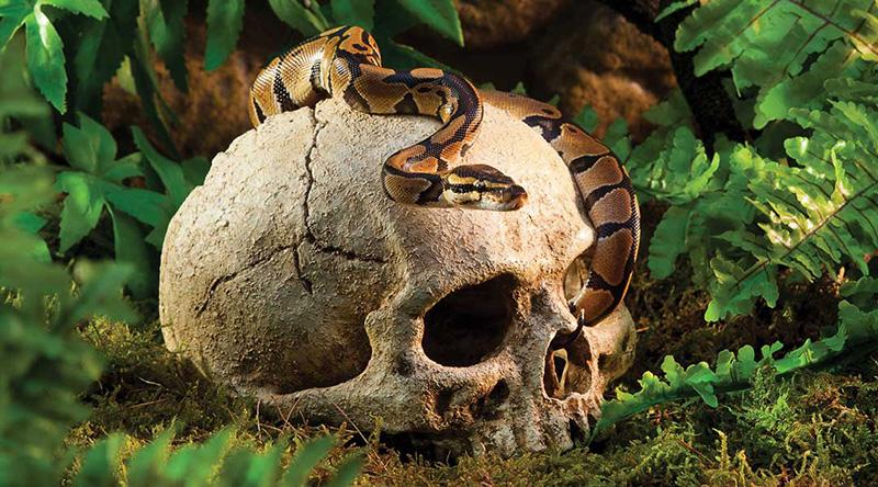Декорация Exo Terra Primate Skull